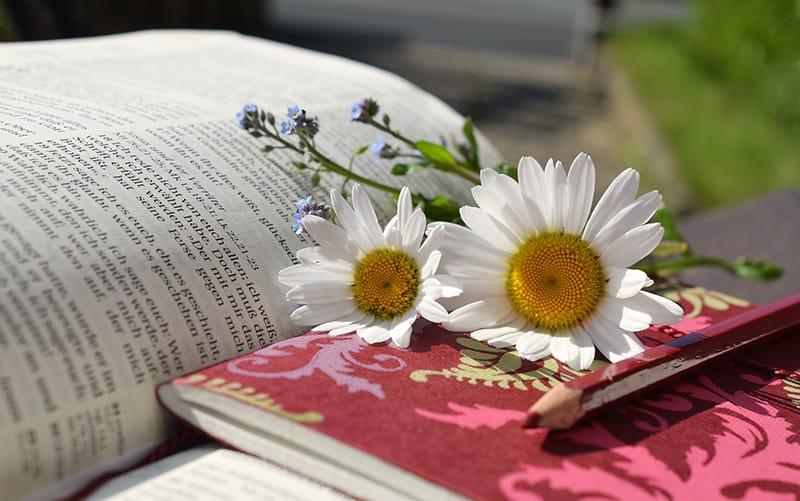 Hera Ediciones Asesoramiento para escribir